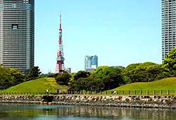 波もほとんどなく、船から桜を近くに観ることができる貴重なスポット。の画像